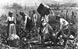 Slavery cotton Google Search