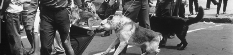 Civil rights demonstrations dog attack Google Search